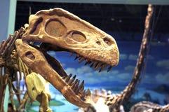 Fossile de dinosaur Photographie stock libre de droits