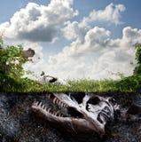 Fossile de dinosaure enterré en saleté Photographie stock libre de droits