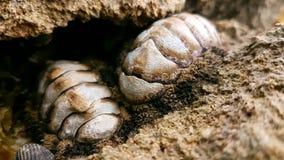 Fossile de parc national de Cauhita Photos libres de droits