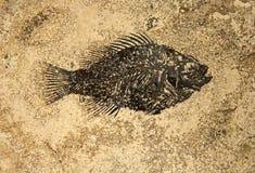 Fossile de poissons image stock