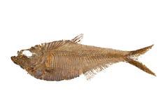 Fossile de poissons Photographie stock libre de droits