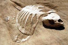 Fossile de tortue Photographie stock libre de droits