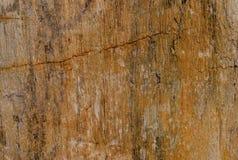 Fossile di legno immagini stock
