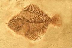 Fossile del pesce Fotografia Stock