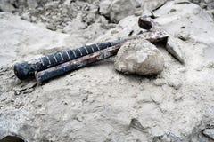 Fossile del riccio di mare nella roccia del gesso raccolta Fotografia Stock