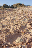 Fossile dell'ammonite in Torcal di Antequera Fotografia Stock