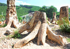 Fossile della foresta Immagini Stock Libere da Diritti