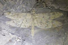 Fossile della libellula immagine stock