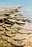 Fossile delle coperture del mare Immagini Stock
