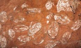 Fossile devoniano del pesce Fotografia Stock