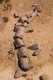 Fossile di dinosauro nella Patagonia Argentina Fotografie Stock