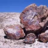 Fossile di legno Petrified fotografia stock libera da diritti