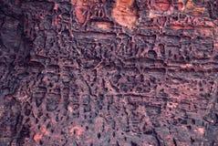 Fossile di pietra Fotografia Stock Libera da Diritti
