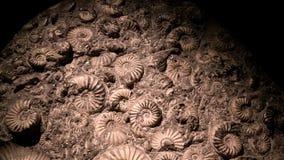 Fossile et ammonite pour à énérgie de combustion Photographie stock