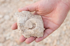 Fossile found in the desert Stock Image