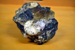 Fossile miroitant blanc d'ammonite dans une roche massive Photo stock