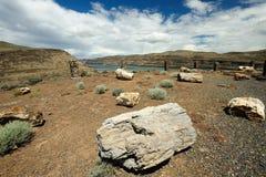 Fossile petrified del Ginkgo fotografia stock