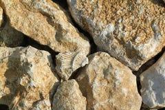 Fossile préhistorique Image libre de droits