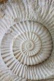 Fossile préhistorique d'ammonite Photographie stock