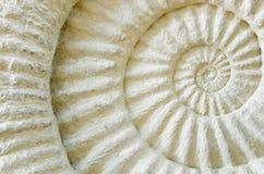 Fossile préhistorique d'ammonite Photographie stock libre de droits
