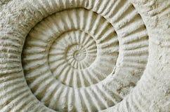 Fossile préhistorique d'ammonite Images libres de droits