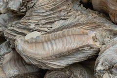 Fossile reste de la coquille Photo libre de droits