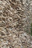 Fossile reste de la coquille Photographie stock