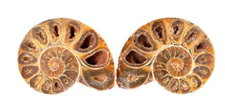 Fossile Shell d'ammonite Photos stock