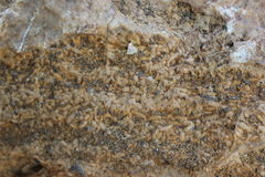 Fossile Thaïlande de riz de roche Photo libre de droits