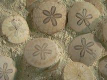 Fossiles Photo libre de droits
