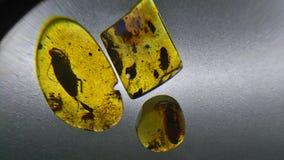 Fossiles ambres photographie stock libre de droits