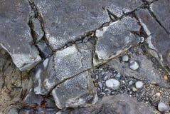 Fossiles au rivage Flaggy, Irlande Image libre de droits