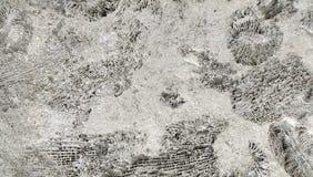 Fossiles d'ammonite sur une roche Photo stock