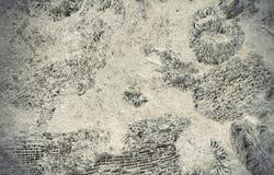 Fossiles d'ammonite sur une roche Images libres de droits