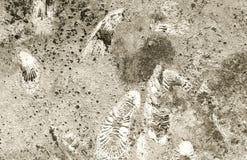 Fossiles d'ammonite sur une texture de roche Image libre de droits