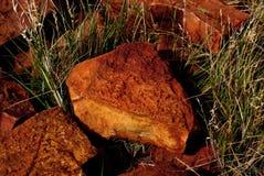 Fossiles de désert de Simpson Photographie stock libre de droits