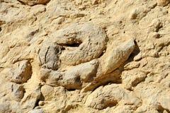 Fossiles des ammonites. Image stock
