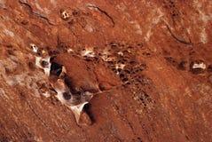 Fossiles en grès rouge Image libre de droits