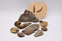 Fossiles et gemmes sur le fond blanc Images stock