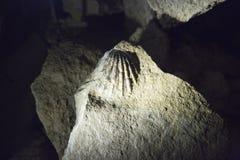Fossiles i den Ruakuri grottan Fotografering för Bildbyråer