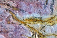 Fossiles invertébrés images libres de droits