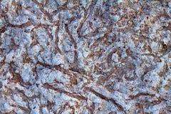 Fossiles invertébrés photographie stock libre de droits