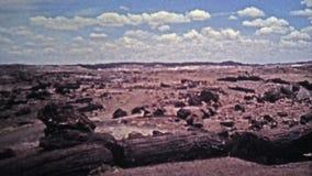1972 : Fossiles pétrifiés d'arbre de Forest National Park et formations géologiques banque de vidéos