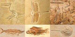 Fossili Immagine Stock Libera da Diritti
