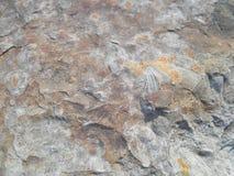 Fossili Fotografie Stock