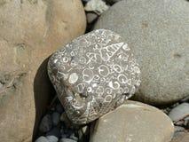 fossili Fotografia Stock Libera da Diritti