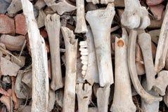 Fossili immagini stock libere da diritti