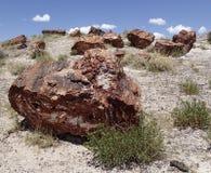 Fossili dalla foresta di legno petrificata Fotografia Stock Libera da Diritti
