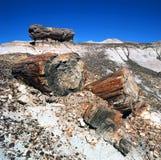 Fossili di legno Petrified immagine stock