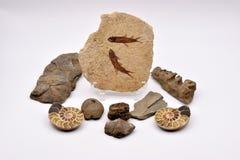 Fossili e gemme su fondo bianco Fotografia Stock Libera da Diritti